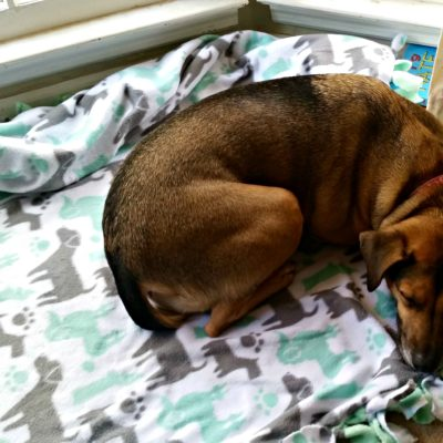 To show our love for our pup, we made her a DIY no-sew fleece blanket. It was super easy and she loves it! #ToPetsWithLove #Sponsored