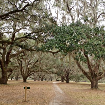 The grounds at Hofwyl-Broadfield Plantation in Darien, GA are beautiful to stroll. Georgia State Parks