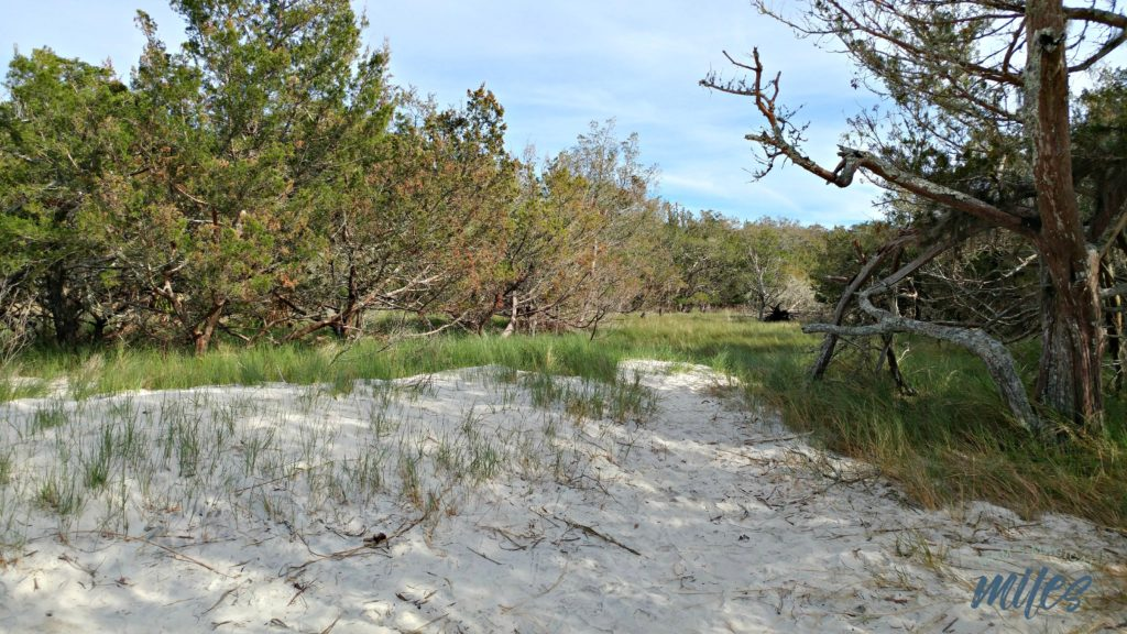 The environment at Jekyll Island's St. Andrews Beach is more rustic and wild than that of the more populated Great Dunes Beach.