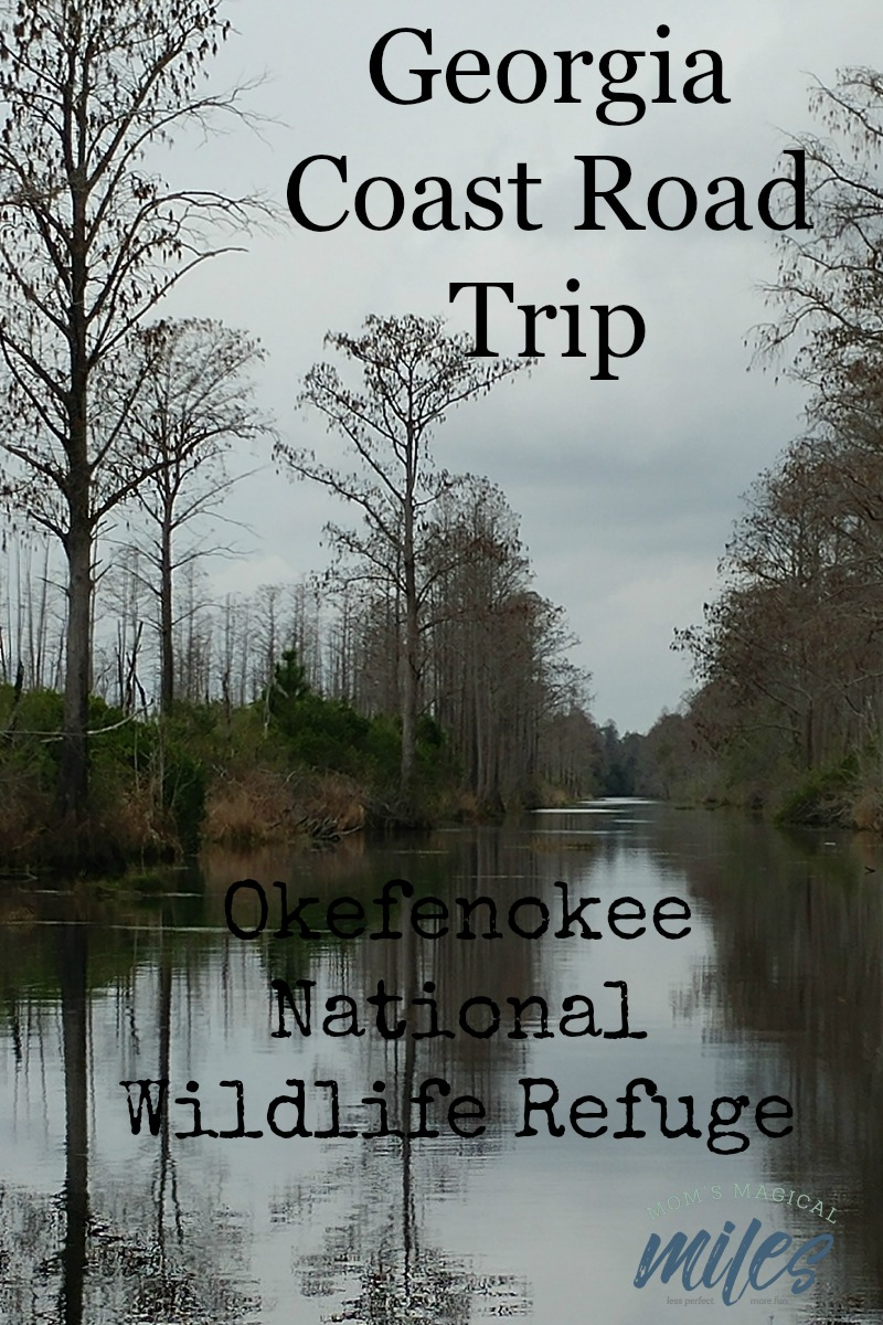 Take a road trip to the Okefenokee Swamp! The Okefenokee National Wildlife Refuge in Folkston, GA makes it easy to learn more about this fascinating eco-system.