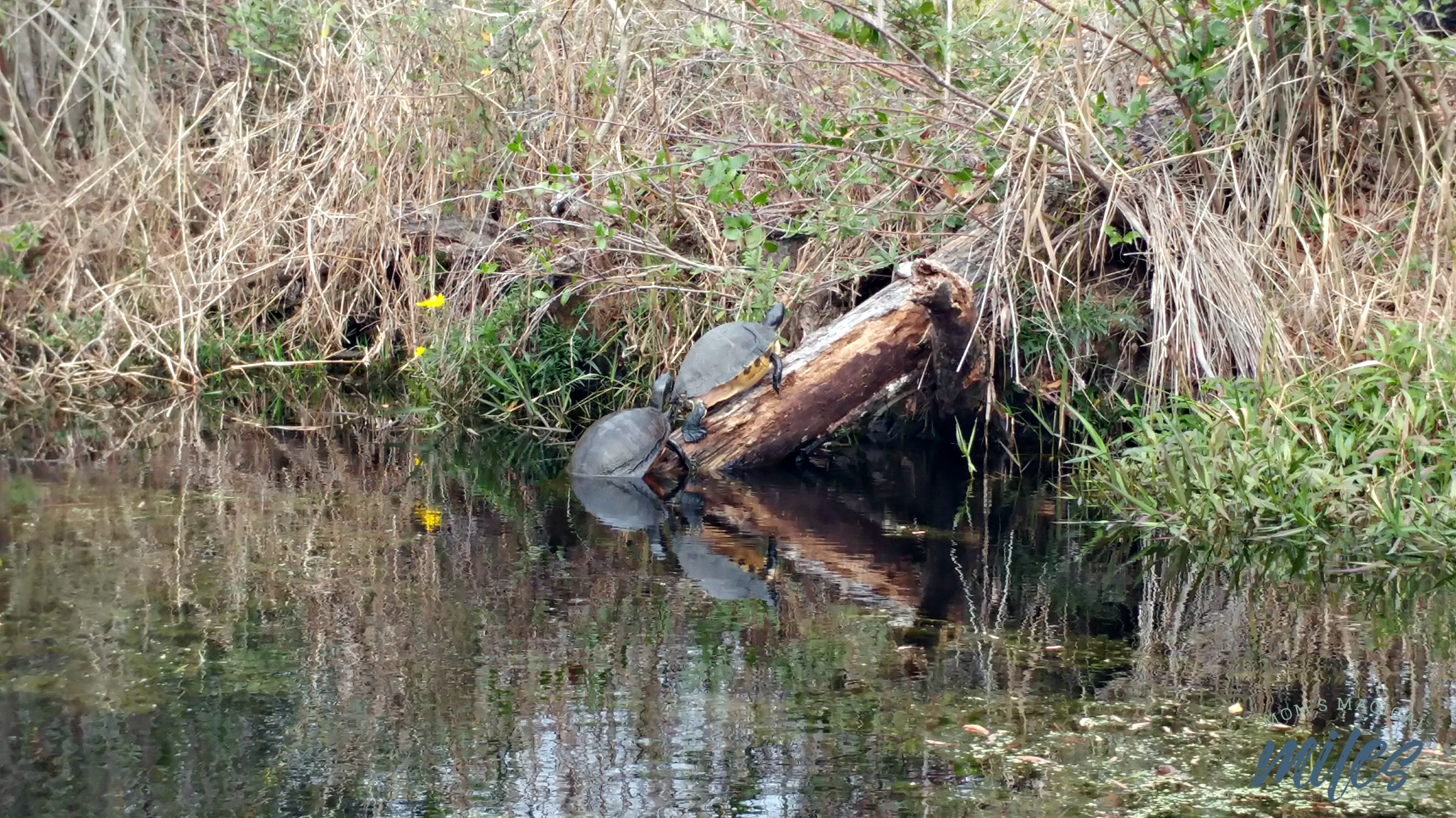 Wildlife abounds in the Okefenokee Swamp!