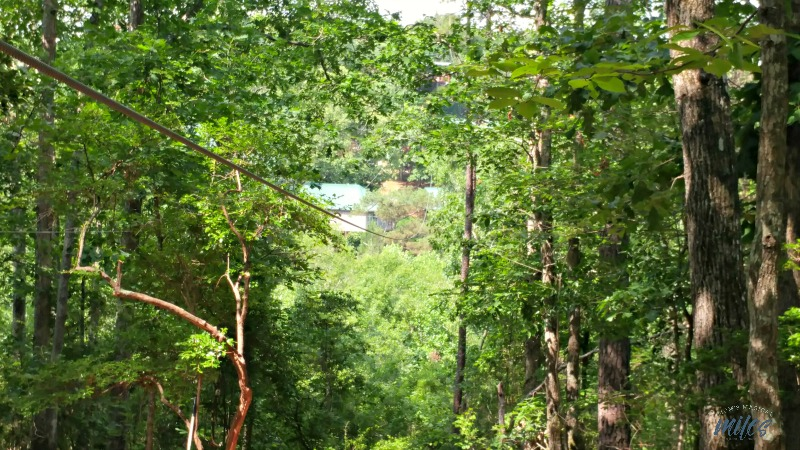 The views from Level 2 of the zip line at Historic Banning Mills can't be beat!