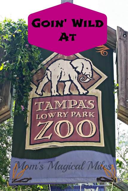 "The Zoo is accredited by the Association of Zoos and Aquariums (AZA), and is featured among the ""Top 25 Zoos in the U.S"" by TripAdvisor () and ""10 Best Zoos in the U.S."" by Trekaroo (). The Zoo is located at W. Sligh Avenue in Tampa, one mile west of I (exit 48) and is open seven days a week, from a.m. to 5 p.m. daily."