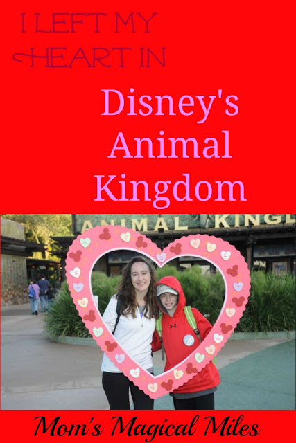 I Left My Heart In Disney's Animal Kingdom