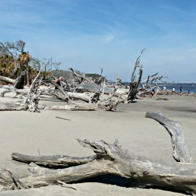 Explore the rustic beauty of Jekyll Island's Driftwood Beach