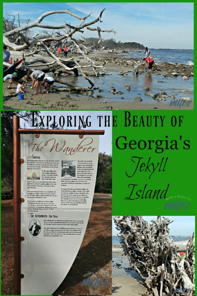 When you visit Georgia's Jekyll Island, make time to explore the WHOLE island.  The history, beauty and wildlife is beyond compare.