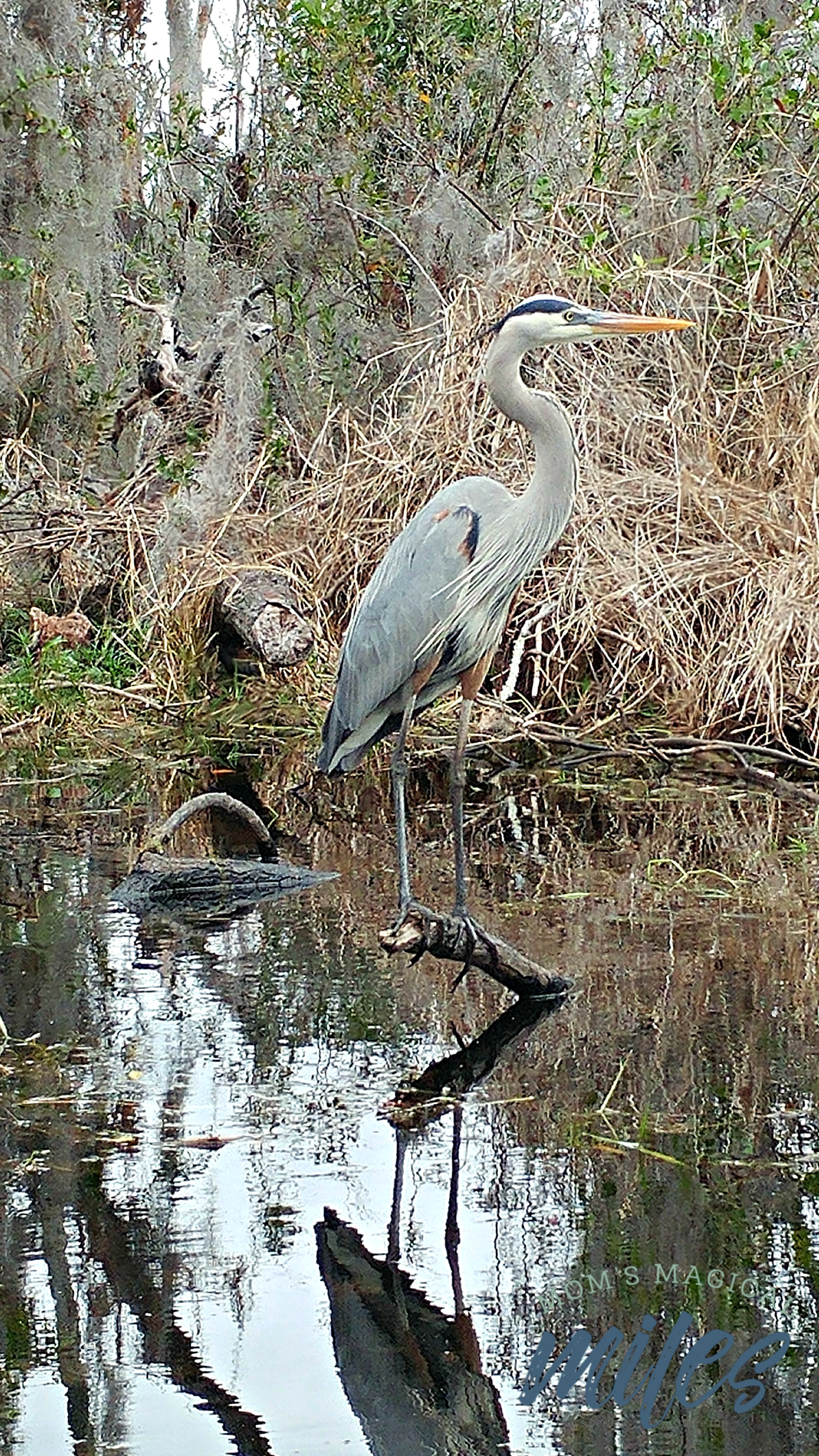A boat tour of the Okefenokee Swamp is the best way to get close up to the animal residents!