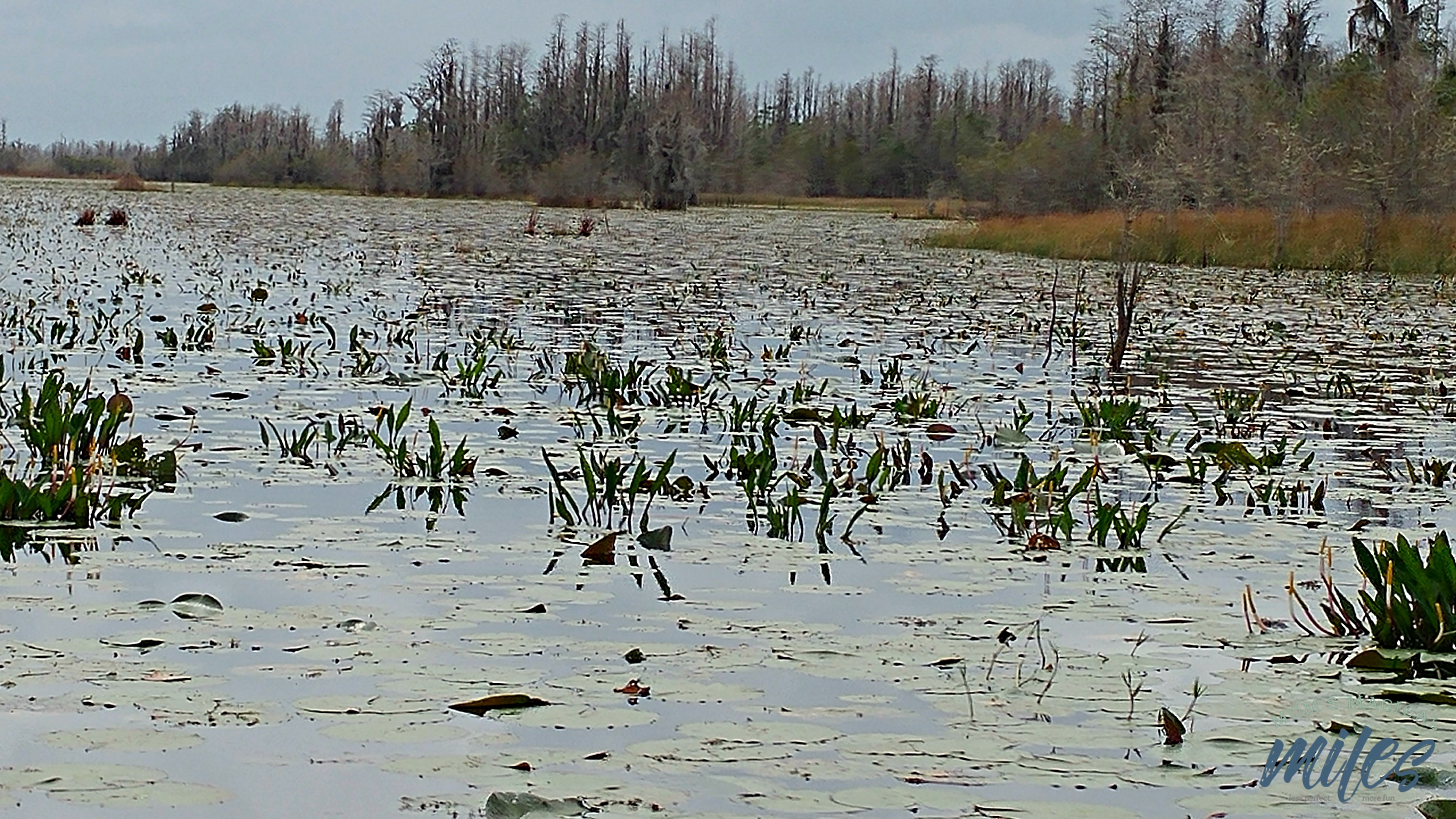 I had no idea I would be traversing a prairie at the Okefenokee Swamp. It was beautiful and peaceful!