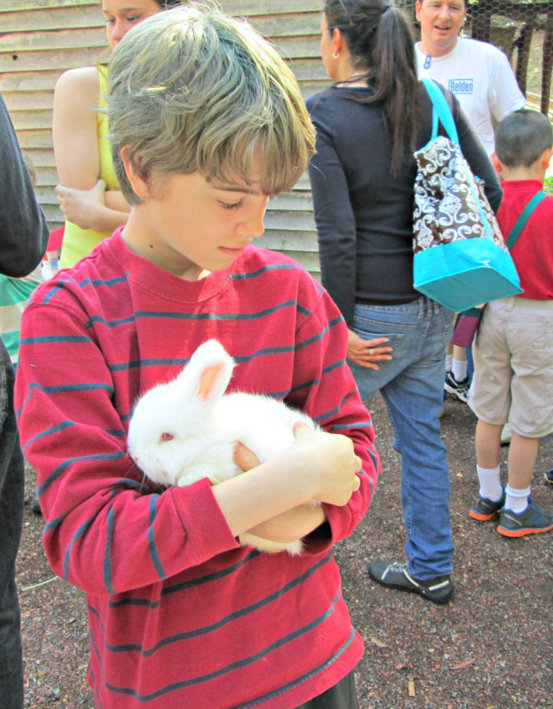 The petting zoo is part of the fun at the Atlanta History Center's Sheep to Shawl event!