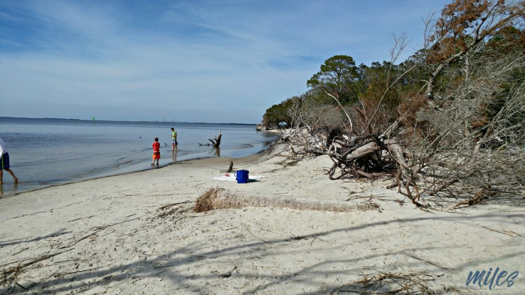 Jekyll Island's St. Andrews Beach is perfect for relaxing and bird-watching.