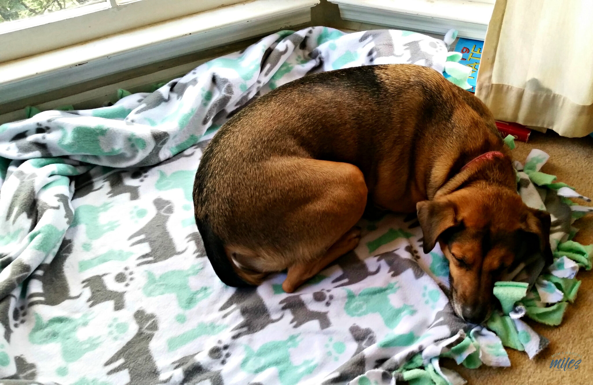 Make A No Sew Fleece Blanket For Dogs Mom S Magical Miles