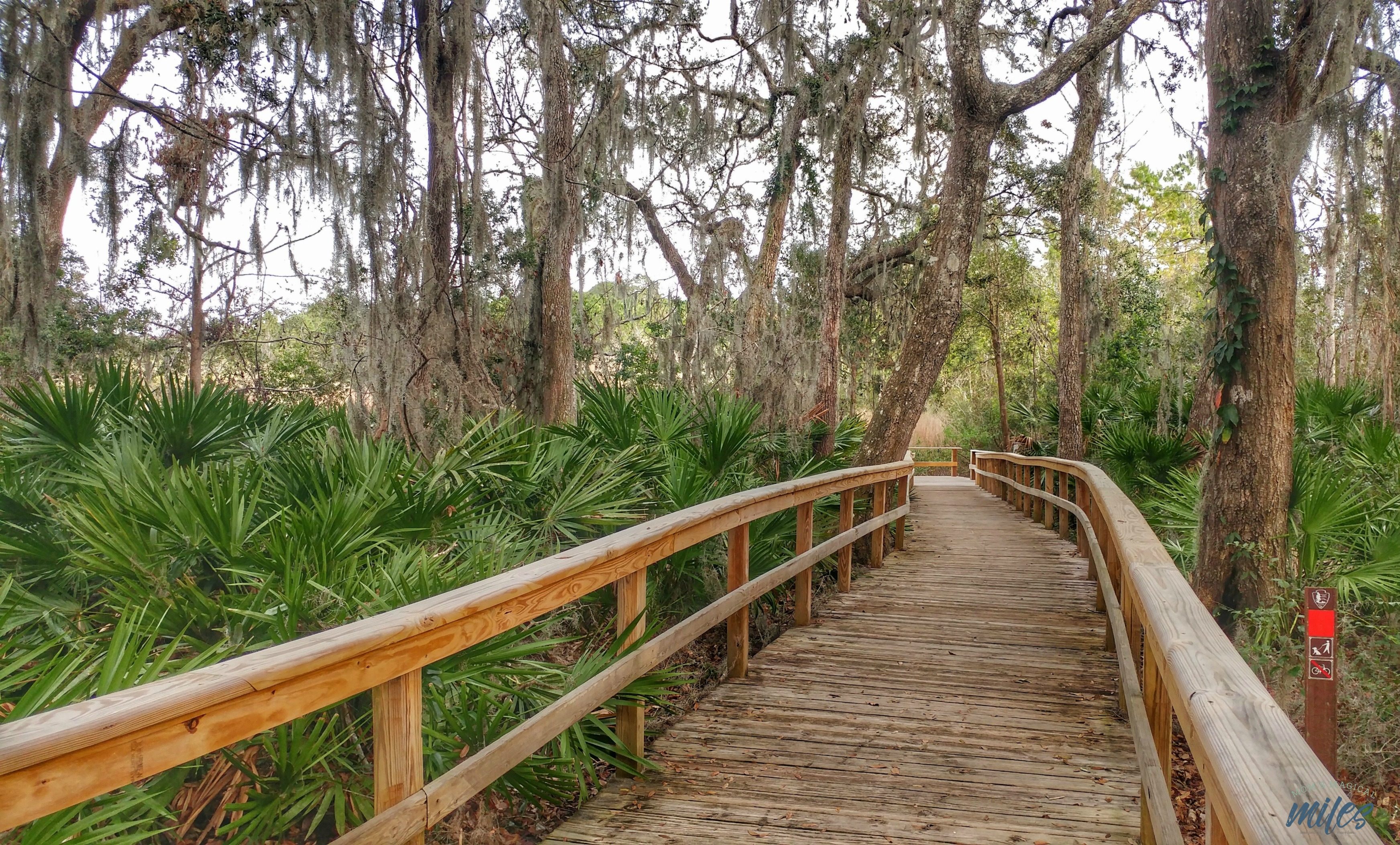 The hiking trails at the Timucuan Preserve Theodore Roosevelt area are easy hikes for the family. Jacksonville, FLorida